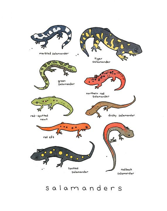 Salamanders Of The Highlands Of Mexico Are Closer To Extinction Than